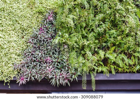 natural interior decoration with tropical botanic plant wall - stock photo