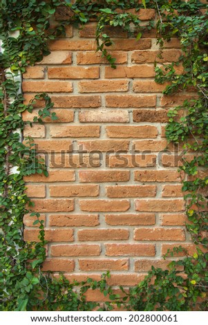 Natural ivy frame on an old brick wall.  - stock photo