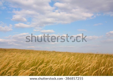 Natural landscape, steppe overgrown with grass and cloudy sky