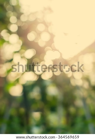 Natural Light Bokeh of Nature on Beige Background. Abstract toned effect - stock photo