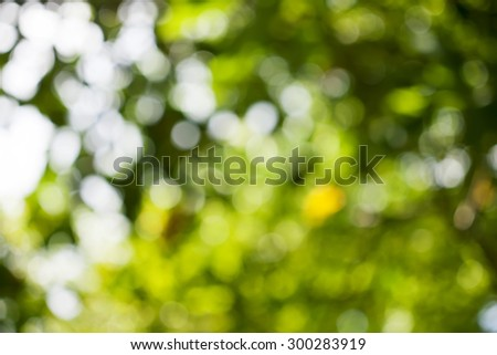 Natural light, green blurred background.