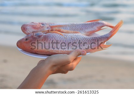 Natural light photo with shallow DOF of female hand holding plate of raw red snapper on ice with sea view background view 1 - stock photo