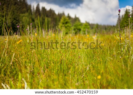 Natural meadow in spring - stock photo