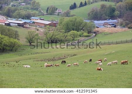 natural mountain farm - stock photo