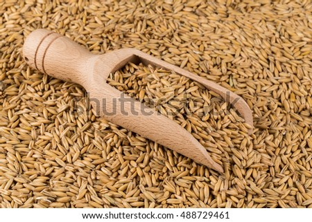 natural oat grains in scoop for background, close up shot