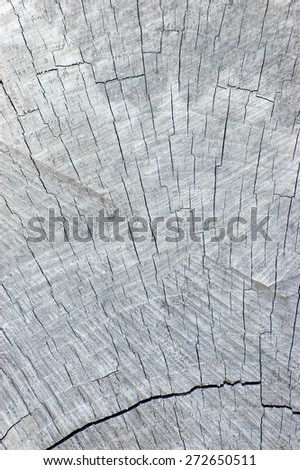 Natural Old Weathered Grey Tree Stump Cut Texture, Large Detailed Textured Gray Bright Vertical Background Pattern - stock photo