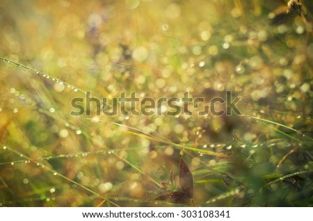 Natural outdoors seasonal blurred defocused background with bokeh lights in vintage colors  - stock photo