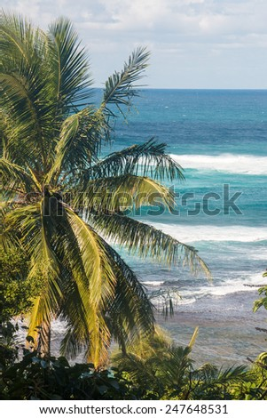 Natural Paradise in a Tropical Island - stock photo