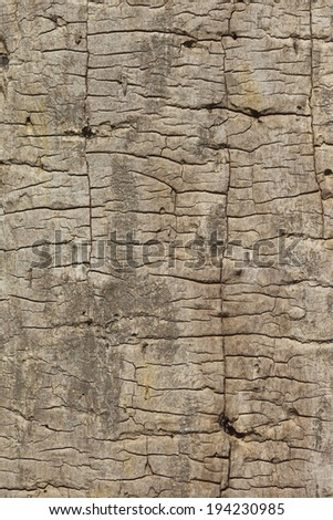 natural patterns and textures of an ash tree trunk with bark beetle tunnels  - stock photo
