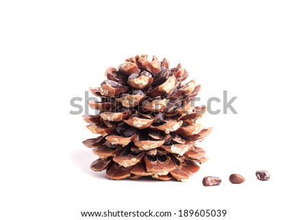 Natural pine cone isolated on white background - stock photo