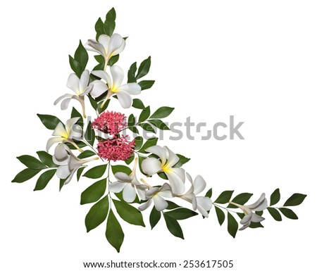 Natural Plumeria ornament isolated on white. Clipping path included. - stock photo