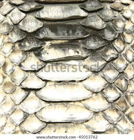 Natural python skin texture - stock photo