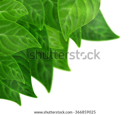 Natural realistic plum leaves background. Bunch of fresh beautiful eco green foliage isolated on white. Nature spring summer concept. Textured plums leaf abstract wallpaper. Ecological nature theme. - stock photo