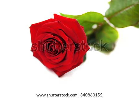 Natural red rose isolated on white background. - stock photo