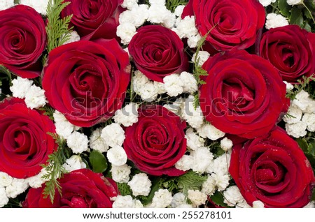 Natural red roses and white flower as background - stock photo