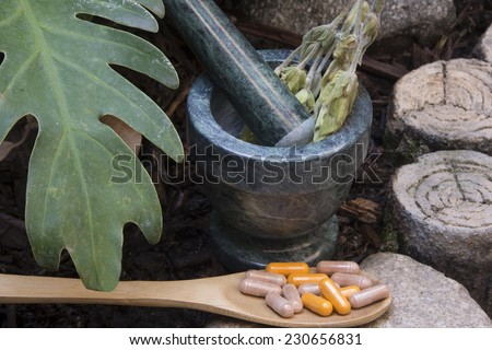 Natural remedies in tranquil setting/Natural remedies/Stalks of fresh herb and bolls illustrate alternative holistic medicine - stock photo