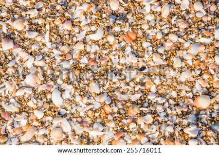 Natural sand and shells background - stock photo