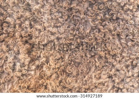 Natural sheep wool texture closeup for background - stock photo