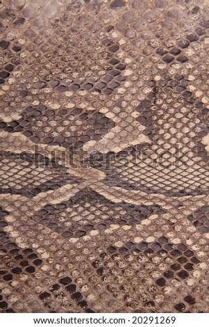 Natural skin of a python - stock photo