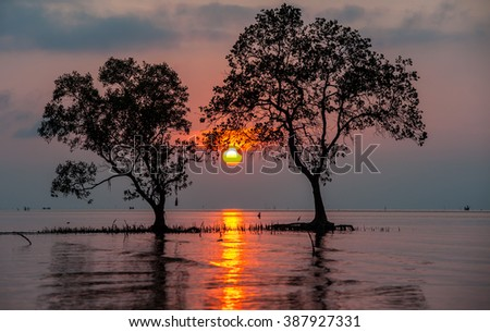 Natural solar eclipse at morning and sea  - stock photo