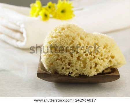 natural sponge in front of the towel - stock photo