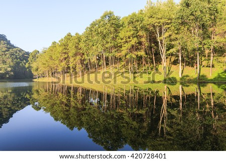 Natural Spruce Woodland in National Park Thailand. - stock photo