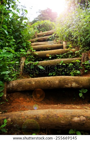 Natural staircase at the greenery outdoor garden - stock photo