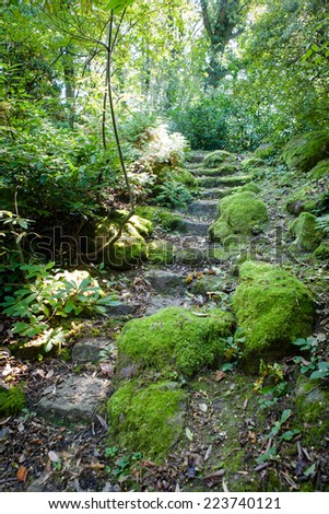 Natural stone stairs covered with moss in beautiful green park surrounded by plants and trees - stock photo