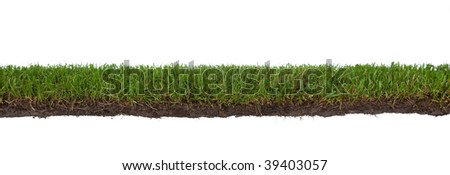 natural strip of grass with roots and dirt, isolated on a white background - stock photo