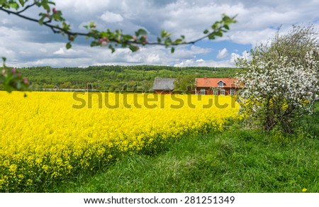 Natural Swedish country frame in spring blooming season - stock photo