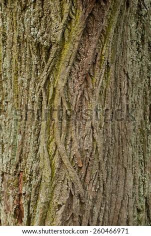 Natural tree bark - stock photo