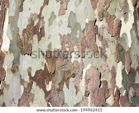 Natural tree bark organic background texture - stock photo