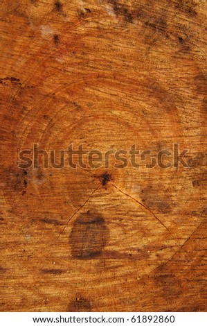 Natural Tree wood texture - stock photo