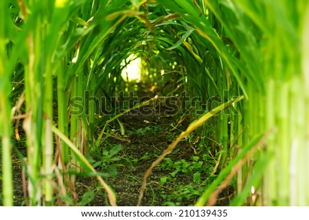 Natural tunnel - stock photo