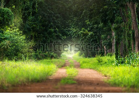 Natural tunnel by green trees in forest. - stock photo