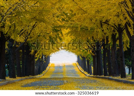 Natural tunnel of love formed by trees in Catholic University of Korea - stock photo