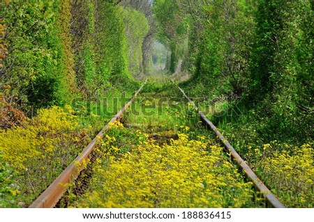 Natural tunnel of love formed by trees in Romania,similar with tunnel of love from Kleven;Ukraina - stock photo