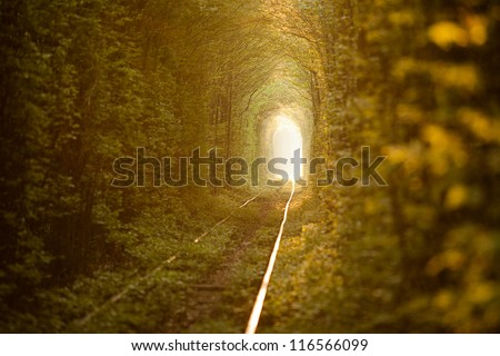 Natural tunnel of love formed by trees in Ukraine, Klevan. - stock photo