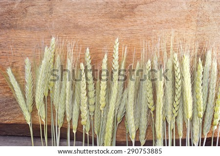 Natural wheat and rye on wooden background - stock photo