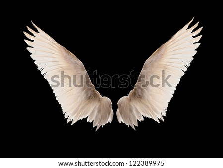 Natural white goose wings. Isolation. - stock photo