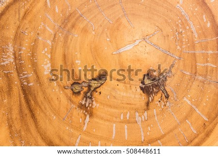 Natural wood texture from cut tree trunk can be used as background