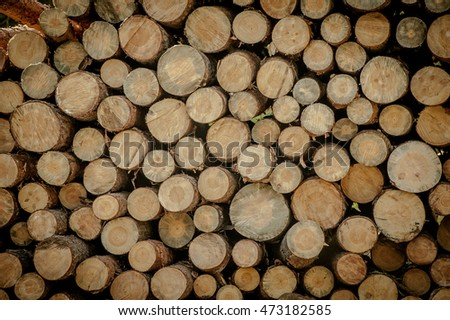 Natural wooden background. Firewood stacked and prepared for winter Pile of wood logs Trunks of trees cut and stacked in the foreground. The Summer Forest From Sawn Old Big Pine.