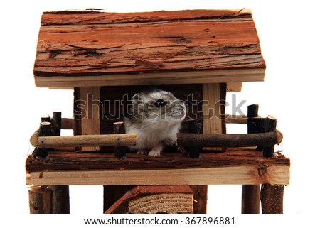 natural wooden house toy with dzungarian hamster isolated on the white background - stock photo