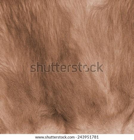 natural yellow-brown fur texture  - stock photo