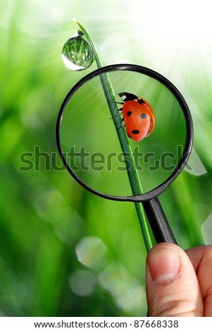 naturalist - stock photo
