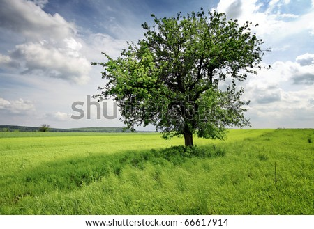 Nature - stock photo