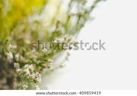 Nature abstract defocus wild grass  in soft warm light flowers background. Green floral art design. Rustic style image. - stock photo