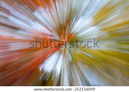Nature abstract, forest colors motion zoom diminishing perspective  - stock photo
