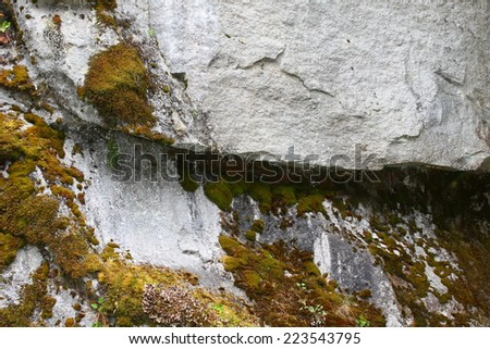 Nature Abstract - lichen 1 - stock photo