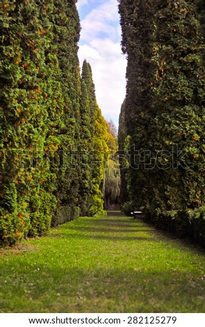 nature alley - stock photo
